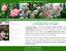 Vivaio rose antiche in Toscana